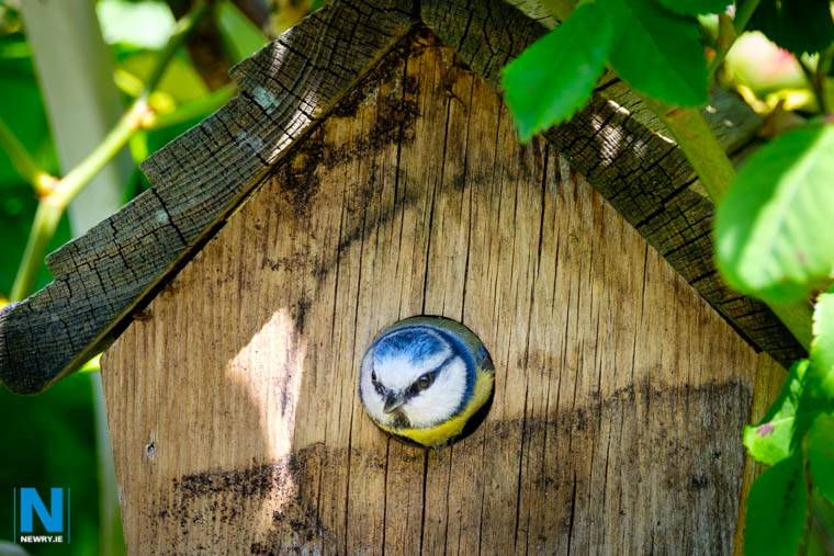 A nest box building workshop is planned for this weekend at Ring of Gullion. Photograph: Columba O'Hare/ Newry.ie
