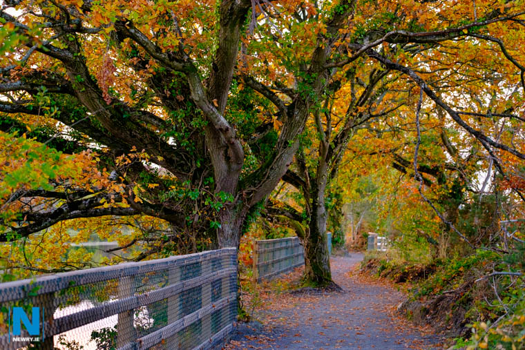 Just imagine the beautiful tree lined greenway from Victoria Lock arriving in to a beautiful tree lined park at the Albert Basin. Photograph: Columba O'Hare/ Newry.ie