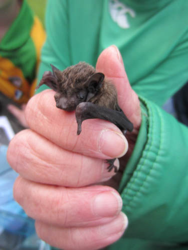 Find out about bats at two local workshops.